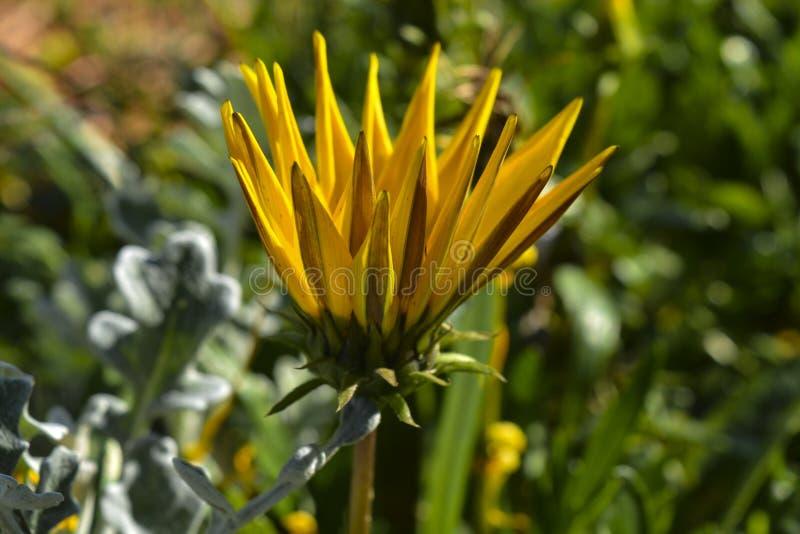 η κάρτα φθινοπώρου εύκολη επιμελείται τις διακοπές λουλουδιών τροποποιεί στο διάνυσμα στοκ φωτογραφίες με δικαίωμα ελεύθερης χρήσης