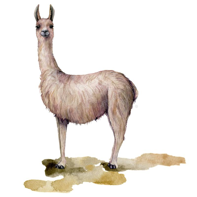 Η κάρτα Watercolor με llama στέκεται στο έδαφος Το χέρι χρωμάτισε την όμορφη απεικόνιση με το ζώο που απομονώθηκε στο λευκό διανυσματική απεικόνιση