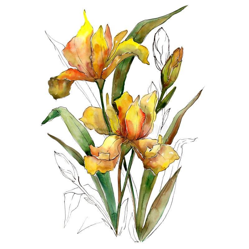 Η κίτρινη ίριδα ανθίζει την ανθοδέσμη Σύνολο απεικόνισης υποβάθρου Watercolor Απομονωμένο Watercolour στοιχείο ανθοδεσμών ελεύθερη απεικόνιση δικαιώματος