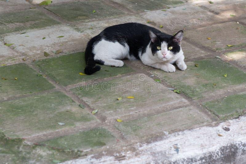 Η καλή γάτα στη στήριξη στο πάτωμα στοκ εικόνα με δικαίωμα ελεύθερης χρήσης