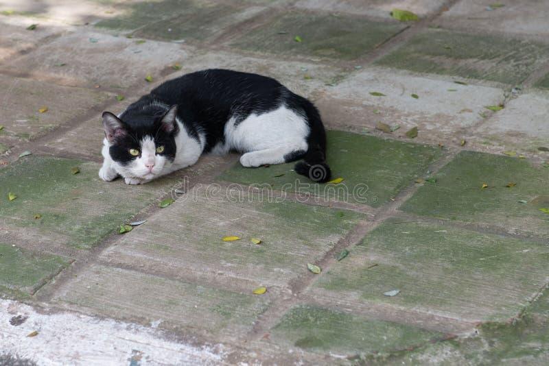 Η καλή γάτα στη στήριξη στο πάτωμα στοκ εικόνα