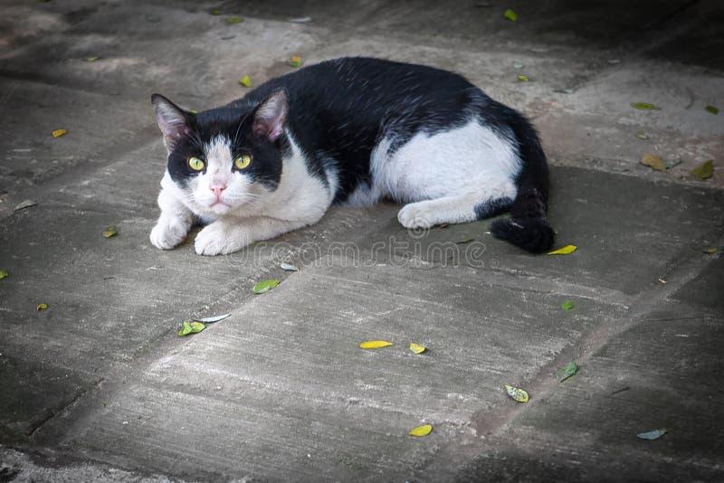 Η καλή γάτα στη στήριξη στο πάτωμα στοκ εικόνες
