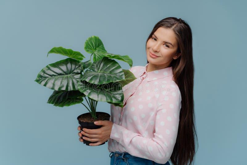Η καλή ευχαριστημένη γυναίκα brunette κρατά τις πράσινες εγκαταστάσεις σπιτιών στο δοχείο, επιθυμεί τα φυτά γλαστρών στο σπίτι, φ στοκ εικόνα με δικαίωμα ελεύθερης χρήσης