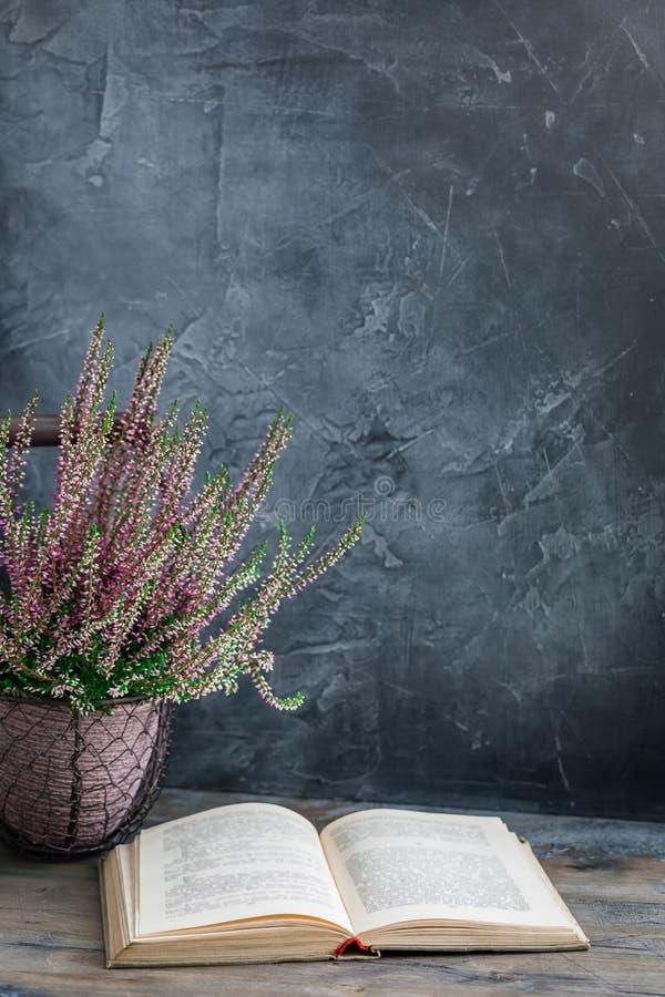 Η καλλιεργημένη σε δοχείο ρόδινη vulgaris ή κοινή ερείκη calluna ανθίζει τη στάση στο ξύλινο υπόβαθρο με ένα παλαιό βιβλίο στοκ εικόνες