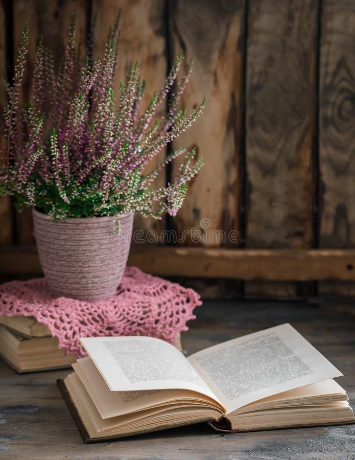 Η καλλιεργημένη σε δοχείο ρόδινη vulgaris ή κοινή ερείκη calluna ανθίζει τη στάση στο ξύλινο υπόβαθρο με ένα παλαιό βιβλίο στοκ φωτογραφίες
