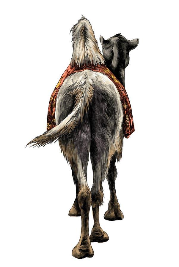 Η καμήλα στέκεται με ένα ακρωτήριο στο πίσω μέρος του οπισθοσκόπου στο γάιδαρο διανυσματική απεικόνιση