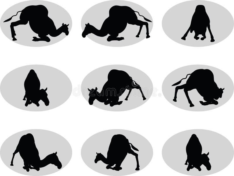 η καμήλα στην εκφόρτωση θέτει ελεύθερη απεικόνιση δικαιώματος