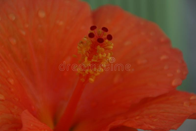 Η καρδιά ενός πορτοκαλιών λουλουδιού και ενός νερού πτώσεων στοκ φωτογραφία με δικαίωμα ελεύθερης χρήσης