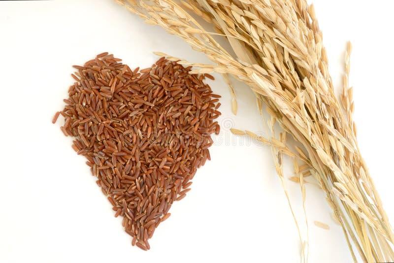 Η καρδιά διαμόρφωσε το καφετί ρύζι και το αυτί του ρυζιού στοκ εικόνες