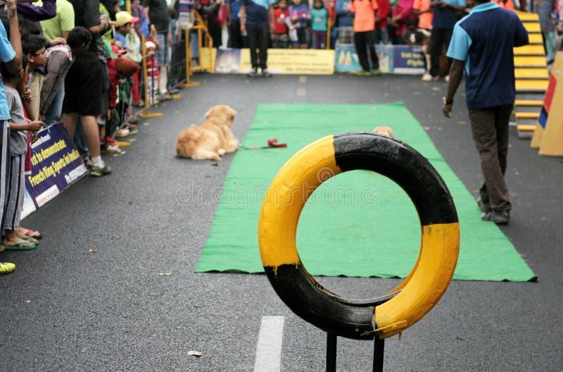 Η κατάρτιση σκυλιών παρουσιάζει στοκ φωτογραφίες με δικαίωμα ελεύθερης χρήσης