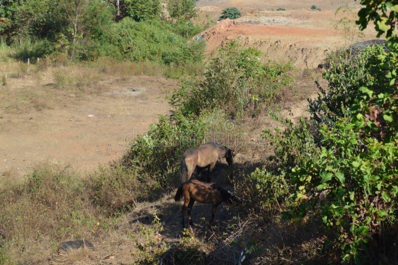 Η κατανάλωση αλόγων στοκ εικόνα με δικαίωμα ελεύθερης χρήσης