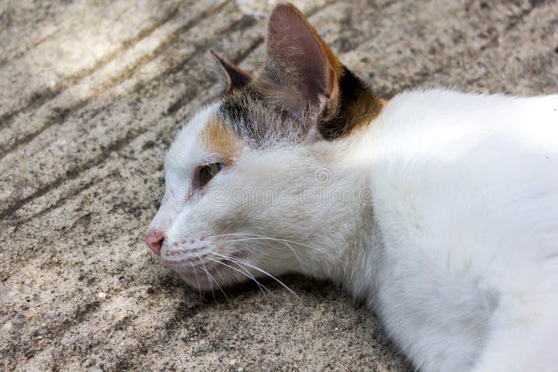 Η καλή άσπρη γάτα καθορίζει στο πάτωμα τσιμέντου στοκ φωτογραφία με δικαίωμα ελεύθερης χρήσης