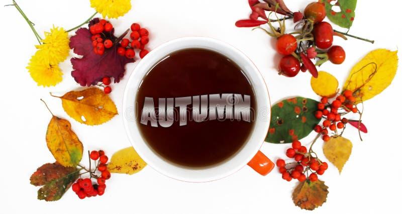 η κινηματογράφηση σε πρώτο πλάνο ανασκόπησης φθινοπώρου χρωματίζει το φύλλο κισσών πορτοκαλί Ζωηρόχρωμα φύλλα, το φθινόπωρο ` λέξ στοκ φωτογραφία