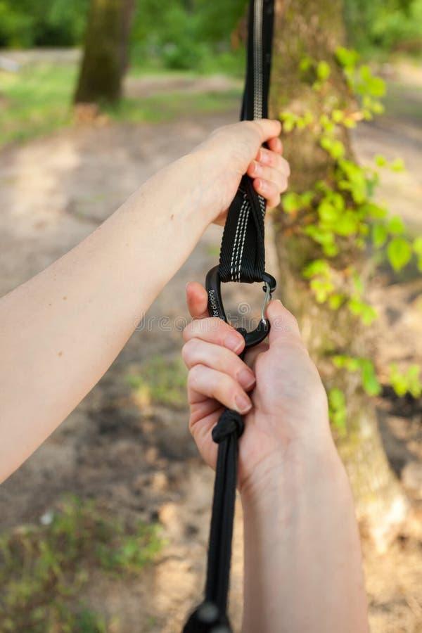 Η κινηματογράφηση σε πρώτο πλάνο των χεριών γυναικών συνδέει τα λουριά αιωρών στο δέντρο στοκ εικόνες