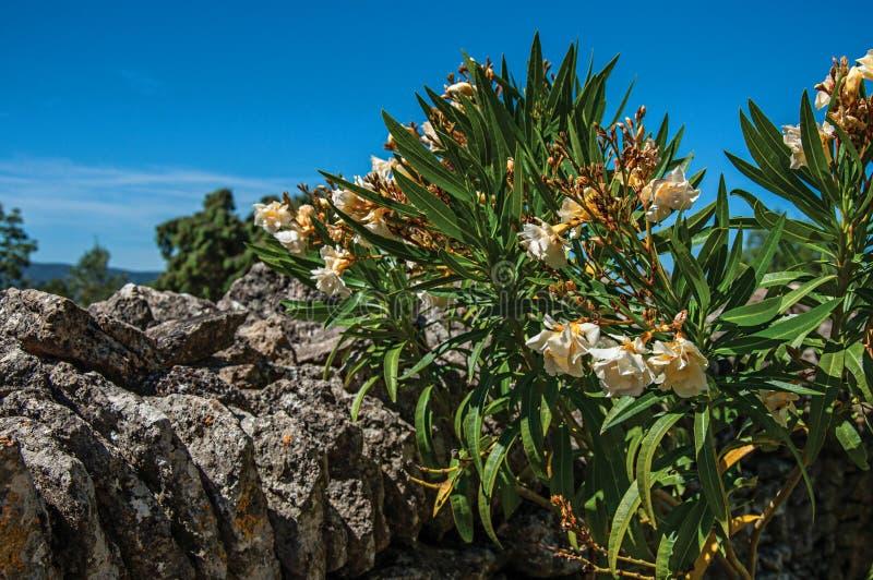 Η κινηματογράφηση σε πρώτο πλάνο της πέτρας περιτοίχισε το φράκτη και τα λουλούδια κάτω από τον ηλιόλουστο μπλε ουρανό, στο χωριό στοκ φωτογραφία