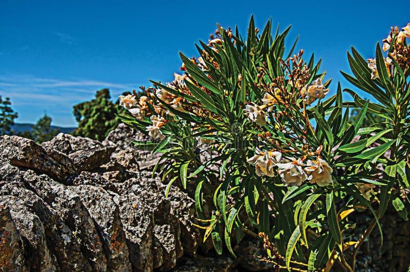 Η κινηματογράφηση σε πρώτο πλάνο της πέτρας περιτοίχισε το φράκτη και τα λουλούδια κάτω από τον ηλιόλουστο μπλε ουρανό, στο χωριό στοκ εικόνα