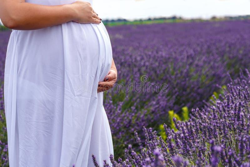Η κοιλιά της εγκύου γυναίκας πορφυρό lavender ανθίζει τον τομέα στοκ φωτογραφίες