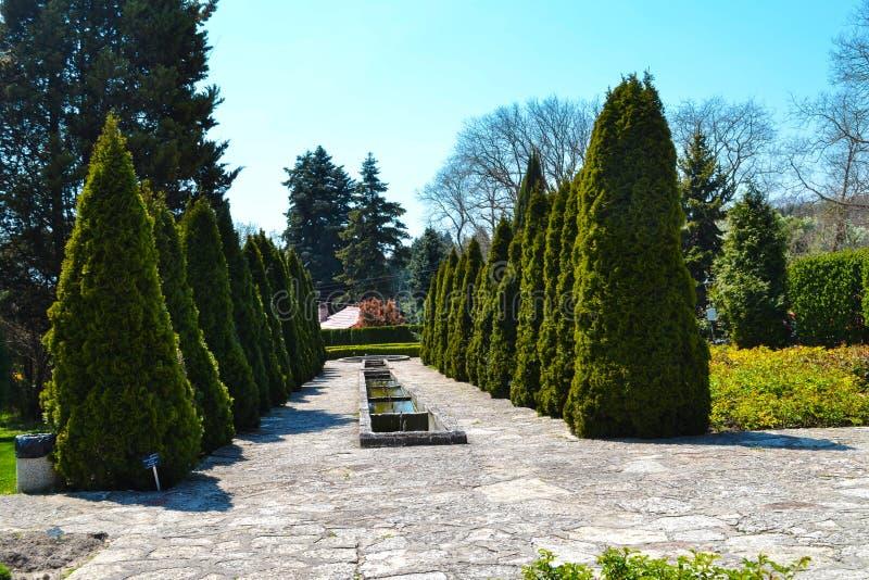 Η κοιλάδα του βοτανικού κήπου στοκ εικόνες