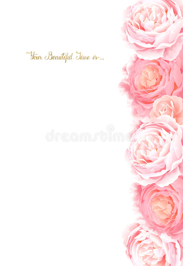 Η κομψότητα ανθίζει το πλαίσιο των τριαντάφυλλων χρώματος Σύνθεση με τα λουλούδια ανθών στο άσπρο υπόβαθρο απεικόνιση αποθεμάτων