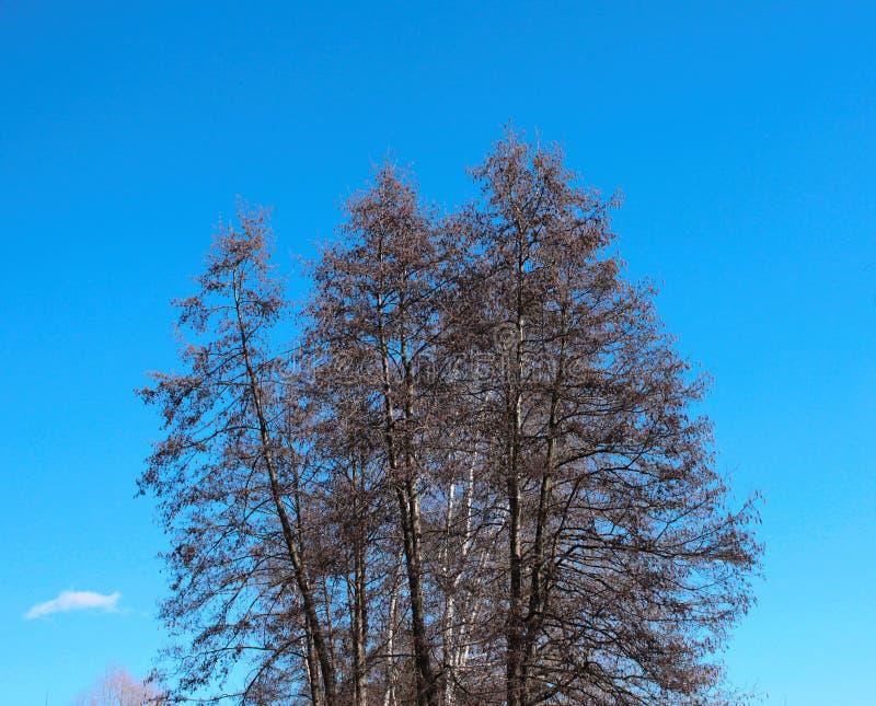 Η κορώνα ενός δέντρου ενάντια σε έναν μπλε ουρανό στοκ εικόνες με δικαίωμα ελεύθερης χρήσης