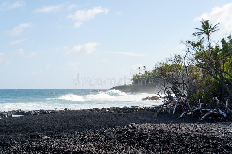 Η κυματωγή χτυπά την ακτή δέντρων των φοινικών και drywood στην παραλία Pohoiki στοκ εικόνες