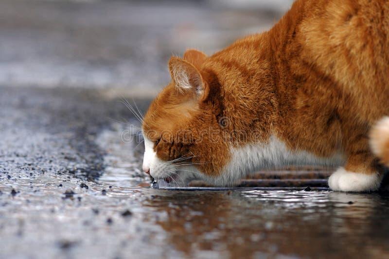 Η κόκκινη γάτα στοκ φωτογραφία