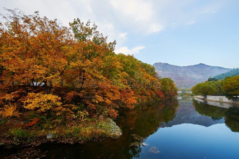 Η κόκκινη όχθη της λίμνης φύλλων σφενδάμου το πρωί φυσικό στοκ φωτογραφία με δικαίωμα ελεύθερης χρήσης