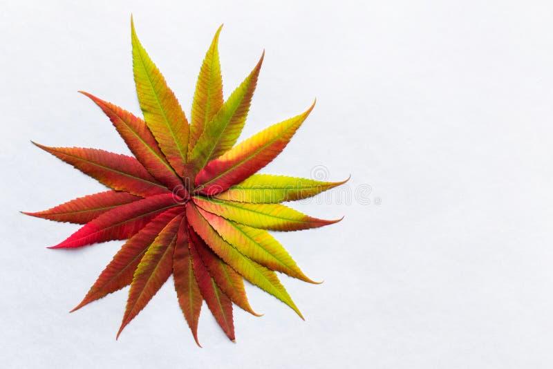 Η κλίση χρωμάτισε τα φύλλα που τακτοποιήθηκαν ως λουλούδι στοκ εικόνα