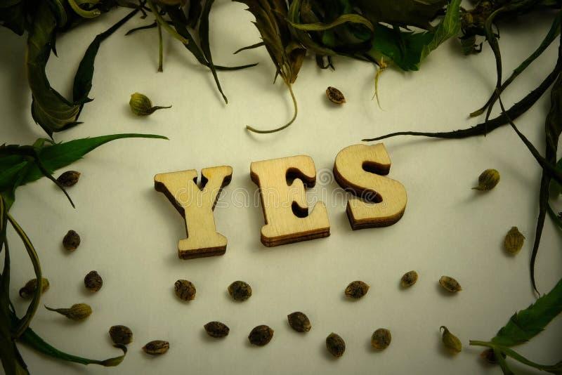 Η λέξη ΝΑΙ αποτελείται από τις ξύλινες επιστολές Ξεράνετε τα φύλλα και τα σιτάρια της μαριχουάνα υπό μορφή πλαισίου σε ένα άσπρο  στοκ φωτογραφίες