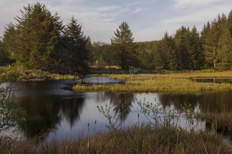 Η λίμνη του δάσους στο ηλιοβασίλεμα στοκ φωτογραφία
