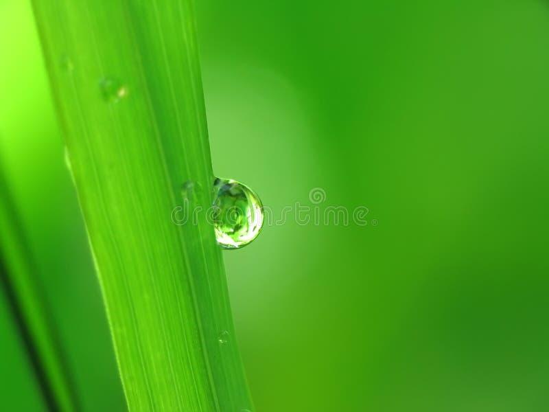 η λεπίδα ρίχνει τη βροχή χλόης στοκ εικόνες με δικαίωμα ελεύθερης χρήσης