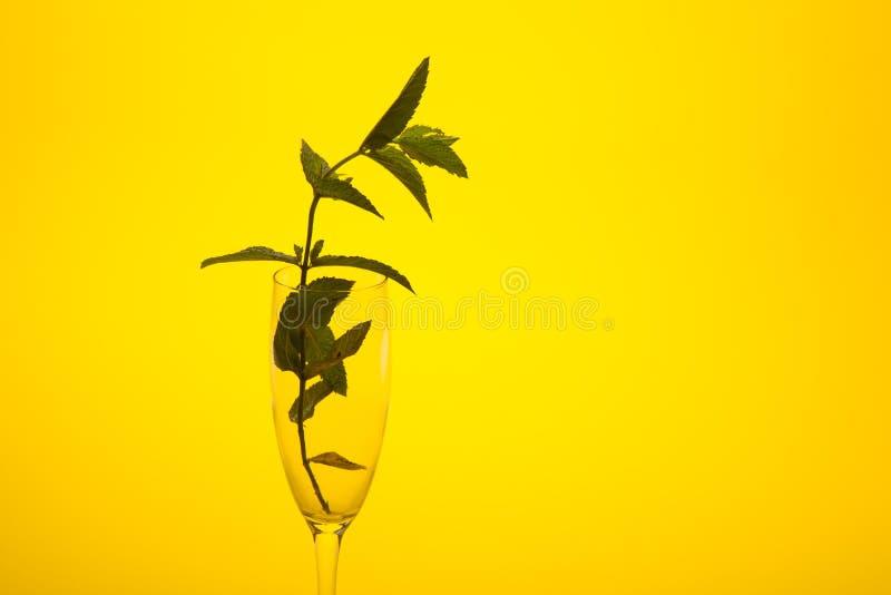 Η μέντα είναι ένα χορτάρι, αρωματικό και με την καλή γεύση στοκ εικόνες με δικαίωμα ελεύθερης χρήσης