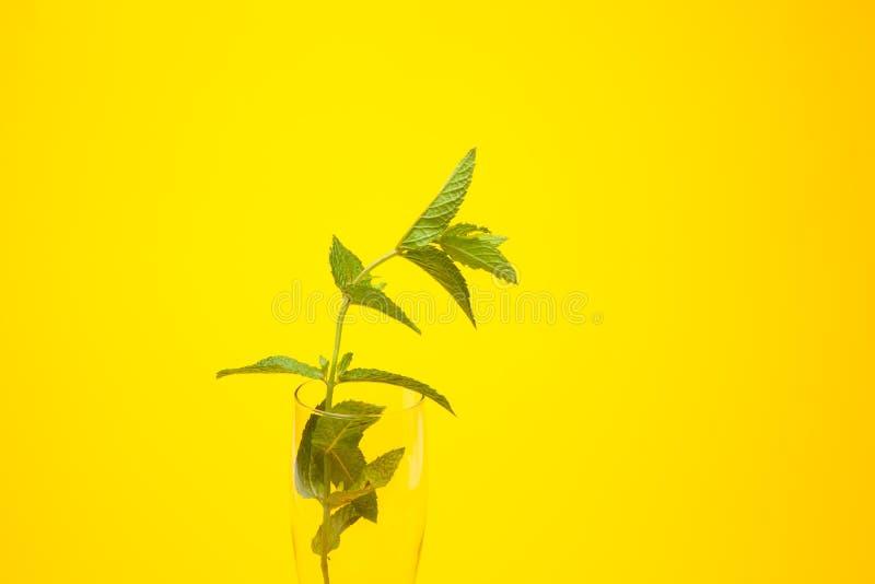 Η μέντα είναι ένα χορτάρι, αρωματικό και με την καλή γεύση στοκ φωτογραφίες