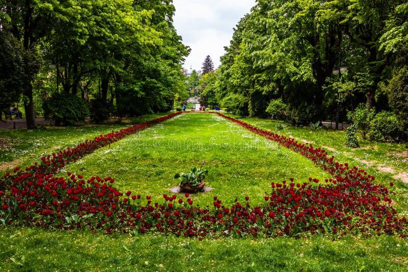Η μακριά αλέα με τα πράσινα δέντρα, τη χλόη και τις ανθίζοντας τουλίπες και forget-me-not ανθίζει στο πάρκο Cismigiu, Βουκουρέστι στοκ εικόνα με δικαίωμα ελεύθερης χρήσης