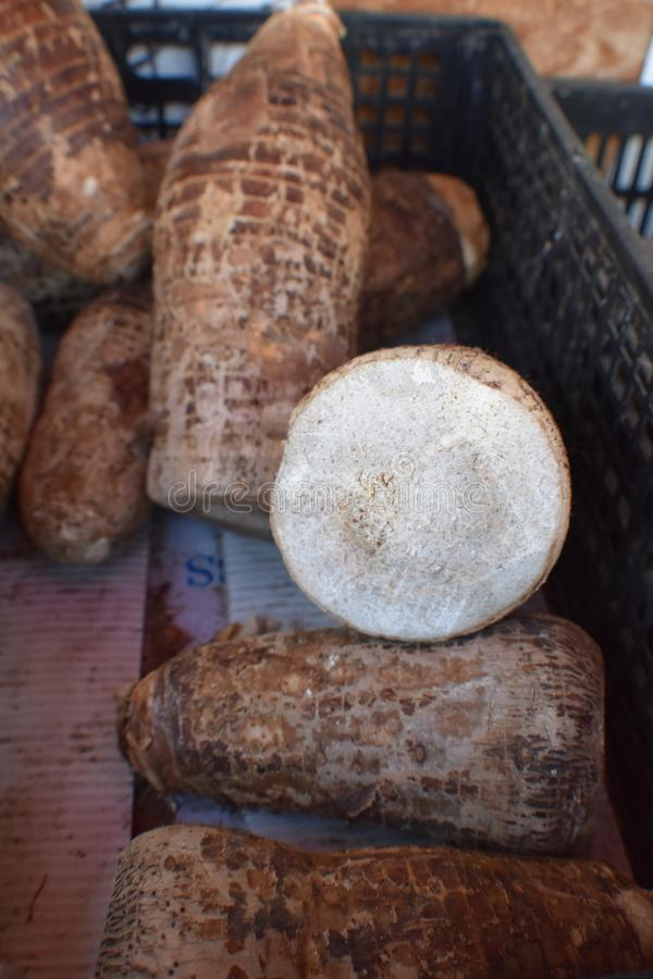 Η μαλαισιανή Taro βολβών ρίζα, επίσης γνωστή ως ρίζα βελών στοκ εικόνες με δικαίωμα ελεύθερης χρήσης
