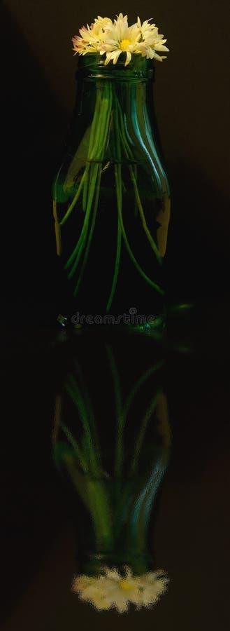 η μαργαρίτα ανθίζει πράσιν&omicro στοκ εικόνες με δικαίωμα ελεύθερης χρήσης