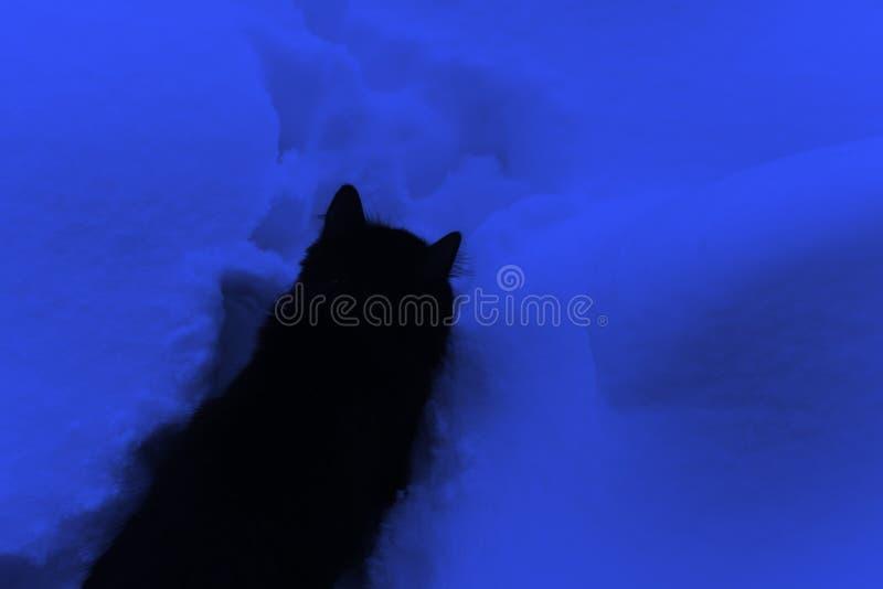 Η μαύρη γάτα είναι στο βαθύ μπλε χιόνι σκοτεινός χειμώνας νύχτα&sigma η πορεία στο παχύ χιόνι στοκ εικόνα