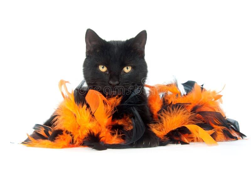 η μαύρη γάτα επενδύει με φτ&epsil στοκ φωτογραφία