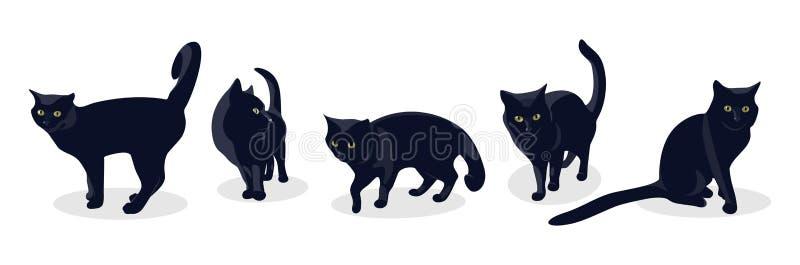 Η μαύρη γάτα σε διαφορετικό θέτει, απομονωμένος στο άσπρο υπόβαθρο ελεύθερη απεικόνιση δικαιώματος