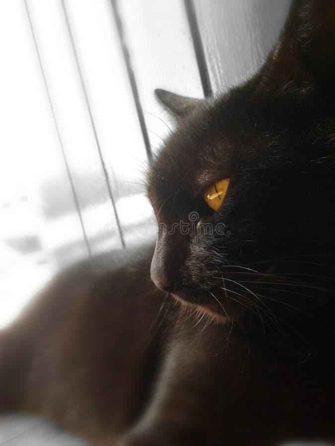Η μαύρη γάτα στοκ φωτογραφία με δικαίωμα ελεύθερης χρήσης