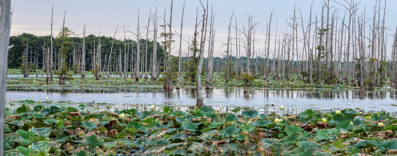 Η μαύρη λίμνη Bayou είναι ένα καταφύγιο ψαράδων ` s στοκ εικόνες με δικαίωμα ελεύθερης χρήσης