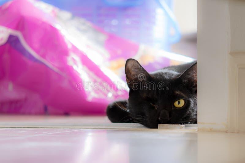 Η μαύρη μονόφθαλμη γάτα ήταν επιρρεπής στη γωνία του δωματίου στοκ εικόνες με δικαίωμα ελεύθερης χρήσης