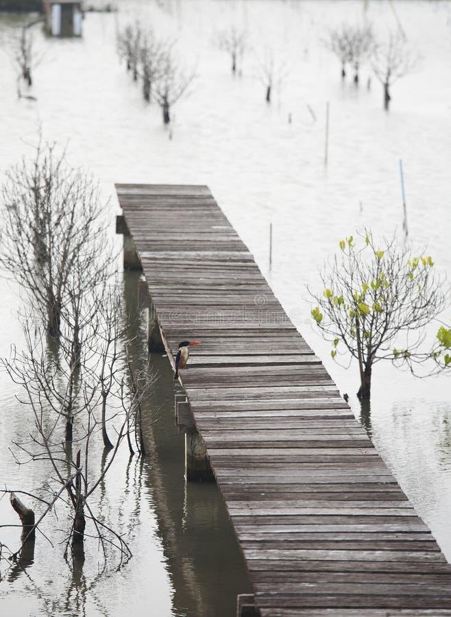 Η μαύρος-καλυμμένη αλκυόνη είναι μια αλκυόνη δέντρων που διανέμεται ευρέως στην τροπική Ασία από την ανατολή της Ινδίας στην Κίνα στοκ εικόνες με δικαίωμα ελεύθερης χρήσης