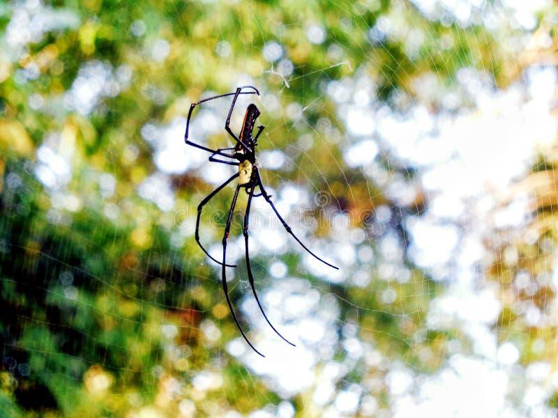 Η μεγάλη αράχνη σε το είναι spiderweb Bokeh στοκ φωτογραφίες