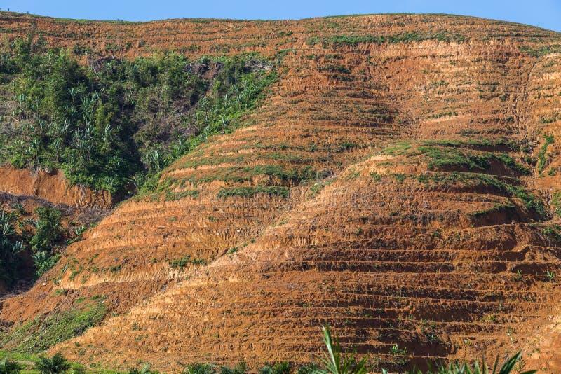 Η μεγάλη περιοχή βουνών είναι περικοπή του δέντρου για αυξάνεται τις φυτείες ελαιοφοινίκων, αποδάσωση στοκ φωτογραφίες με δικαίωμα ελεύθερης χρήσης