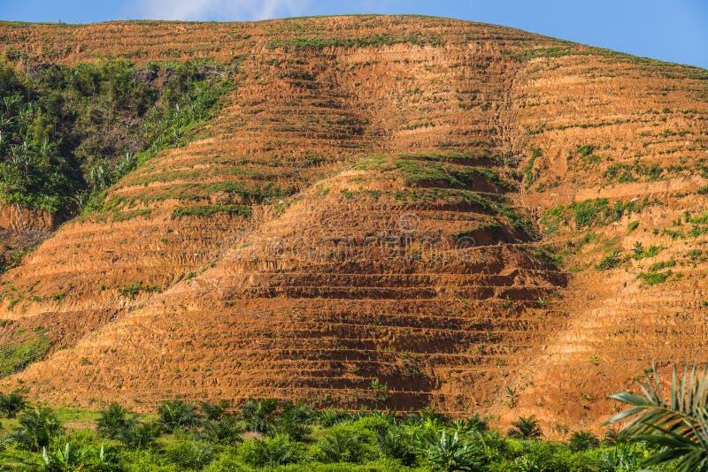 Η μεγάλη περιοχή βουνών είναι περικοπή του δέντρου για αυξάνεται τις φυτείες ελαιοφοινίκων, αποδάσωση στοκ φωτογραφία