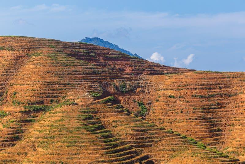 Η μεγάλη περιοχή βουνών είναι περικοπή του δέντρου για αυξάνεται τις φυτείες ελαιοφοινίκων, αποδάσωση στοκ εικόνα