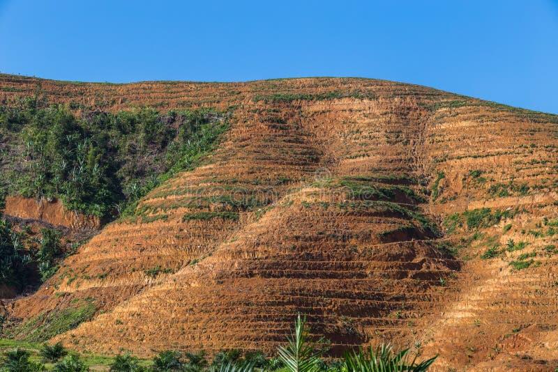Η μεγάλη περιοχή βουνών είναι περικοπή του δέντρου για αυξάνεται τις φυτείες ελαιοφοινίκων, αποδάσωση στοκ εικόνα με δικαίωμα ελεύθερης χρήσης