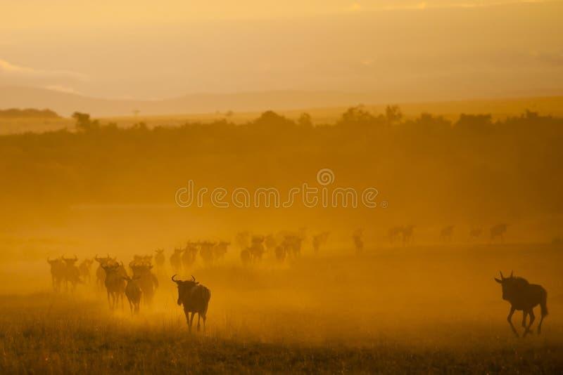 Η μεγάλη μετανάστευση, Κένυα στοκ φωτογραφία με δικαίωμα ελεύθερης χρήσης