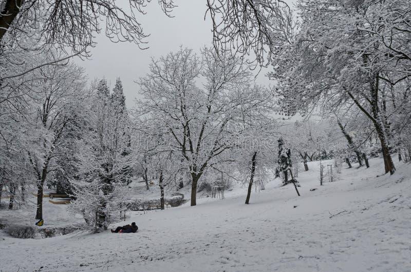 Η μεγαλοπρεπής άποψη των χιονωδών δέντρων και το έλκηθρο γλιστρούν μέσα το χειμερινό πάρκο, Bankya στοκ εικόνα με δικαίωμα ελεύθερης χρήσης
